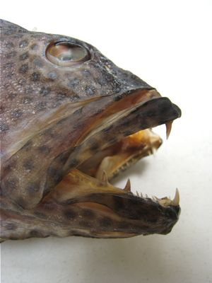 Image of Lapu Lapu
