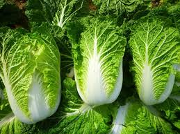 Image of Pechay baguio/ Pechay Chinese/ Cabbage chinese