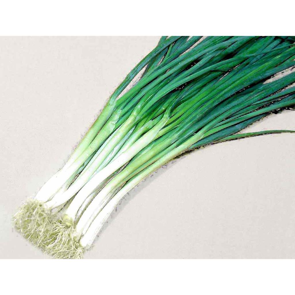 Image of Spring onion/ scallion/ sibuyas dahon
